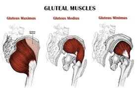 gluteal muskulatur